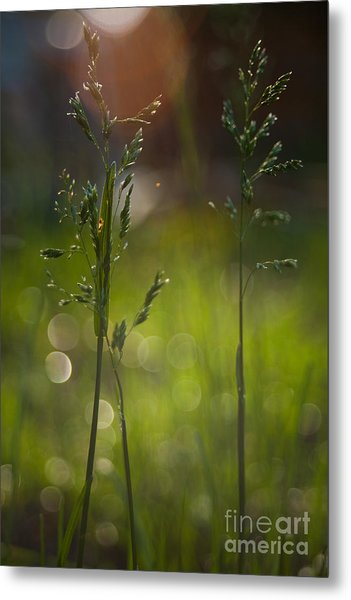 Backyard Metal Print by Sue OConnor
