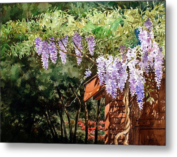 Backyard Wisteria Metal Print by Peter Sit