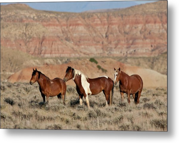 Badland Mustangs Metal Print