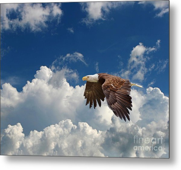 Bald Eagle In The Clouds Metal Print by Dale Erickson