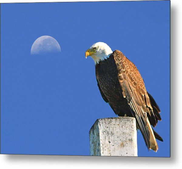 Bald Eagle With The Moon Metal Print