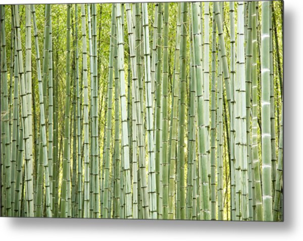 Bamboo Trees Background Metal Print by Vaidas Bucys