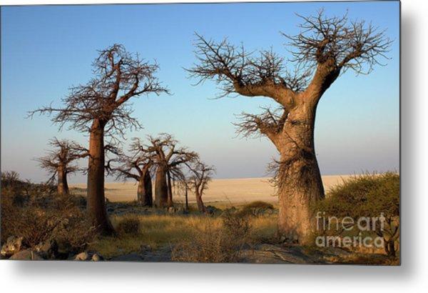 Baobabs Of Makgadikgadi Metal Print