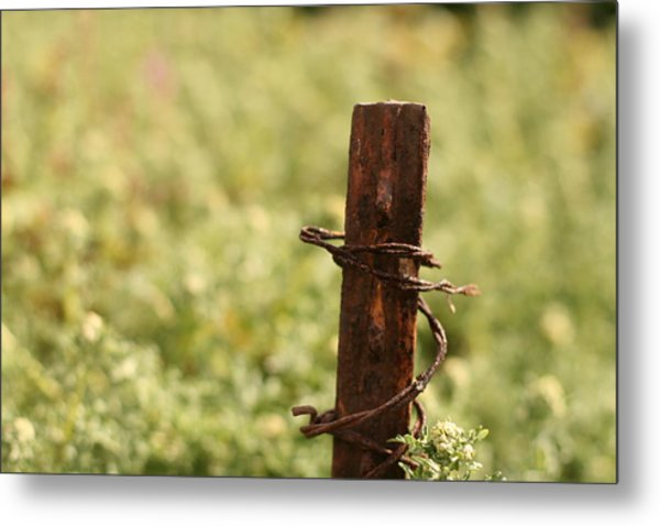 Barbed Wire Green Metal Print
