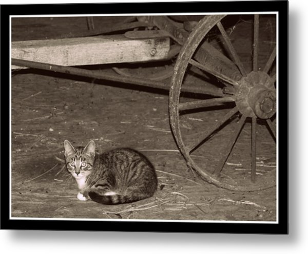 Barn Cat II Metal Print