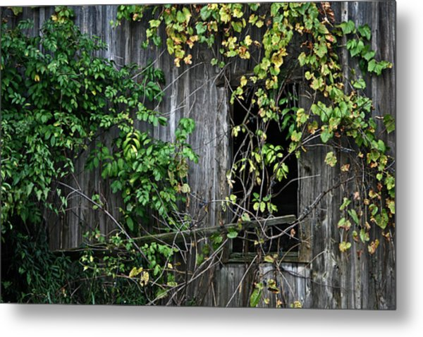 Barn Window Vine Metal Print