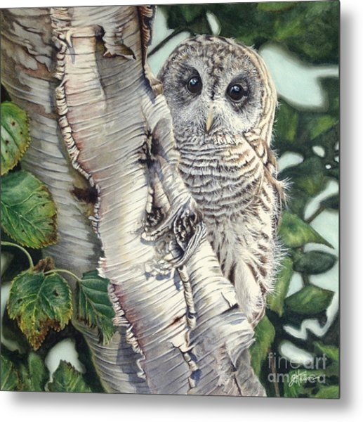 Barred Owl II Metal Print