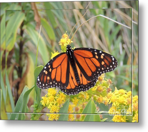 Beach Beauty Metal Print by Laurence Oliver