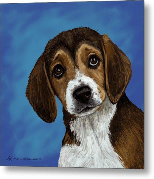 Beagle Eyes Metal Print by Melanie Whitaker