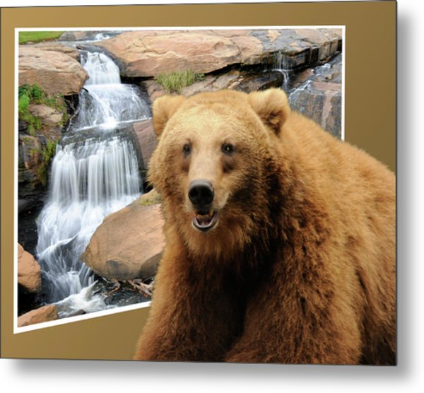 Bear Out Of Frame Metal Print