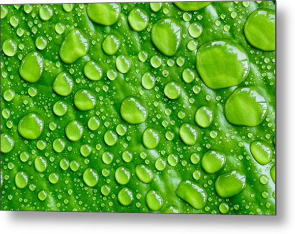 Beautiful Green Leaf With  Water Drops Metal Print by Chatuporn Sornlampoo