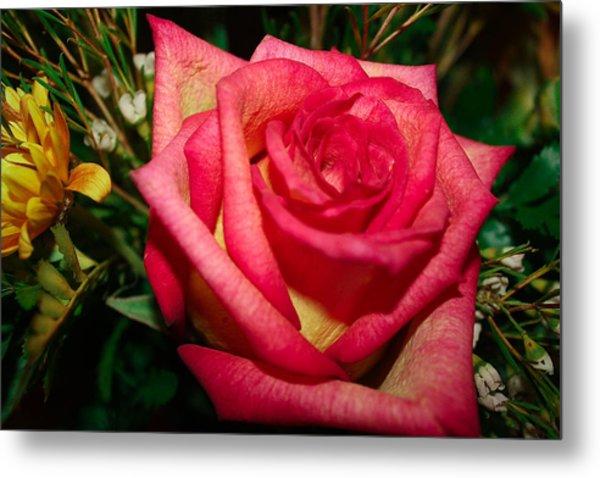 Beautiful Rose Metal Print by David Alexander