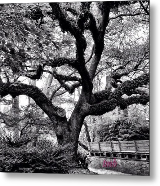 Beauty Comes In Any Color Metal Print