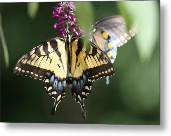 Beauty Of Butterflies  Metal Print by Victoria  Kurlinski