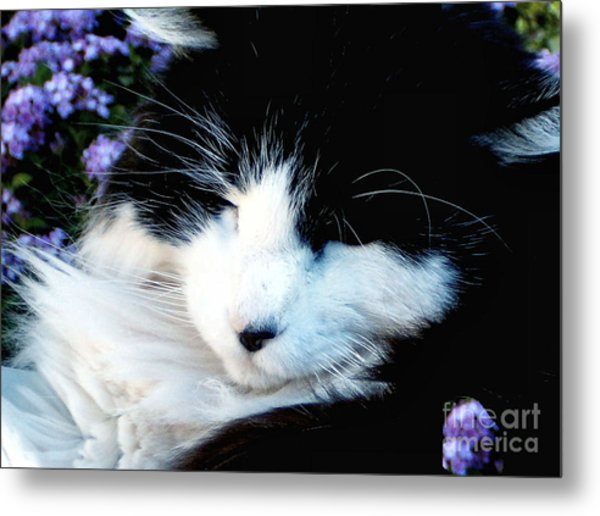 Beauty Sleep Metal Print