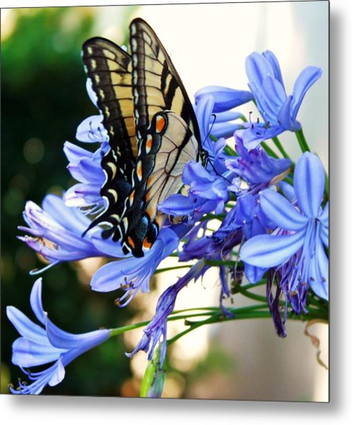 Beautyrest Metal Print by LC  Linda Scott