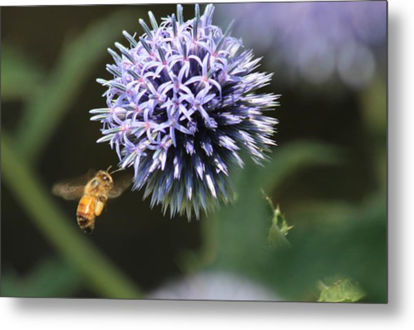 Bee In Flight Metal Print by Janet Mcconnell