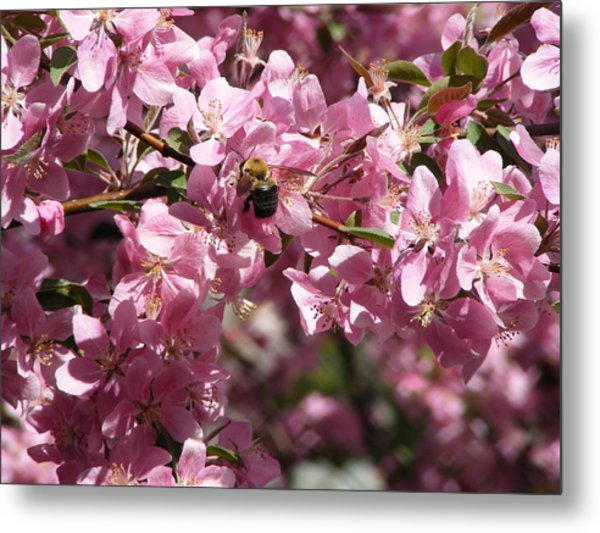 Bee In The Tree  Metal Print