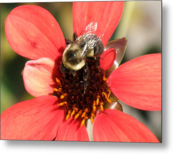 Bee With Flower Metal Print