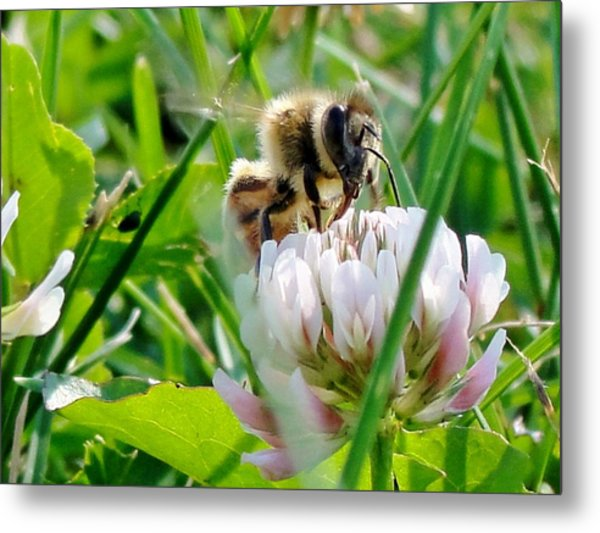 Beeautiful Metal Print by Katie Bauer