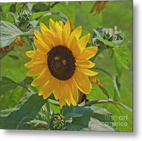 Bees And The Sun Metal Print