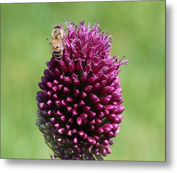 Bee's Delight Metal Print by Janet Mcconnell