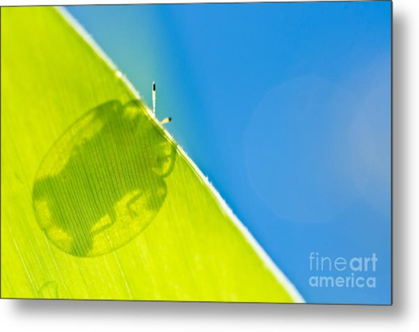 Beetle And Blue Sky Metal Print by Peerasith Chaisanit
