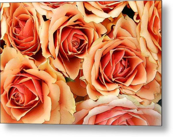 Bergen Roses Metal Print