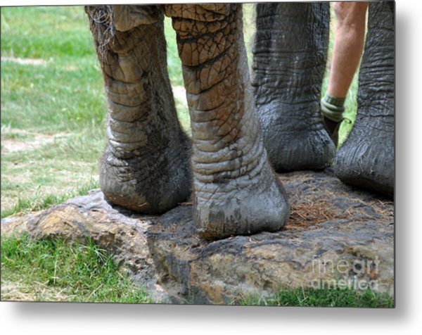 Best Foot Forward Metal Print by Joanne Kocwin