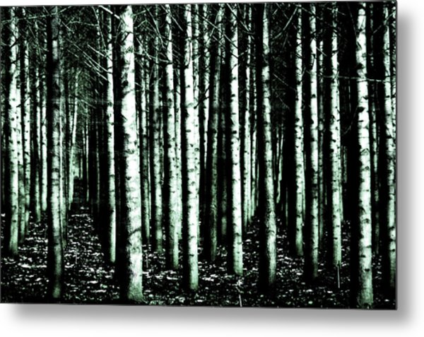 Beyond The Trees Metal Print by Terrie Taylor