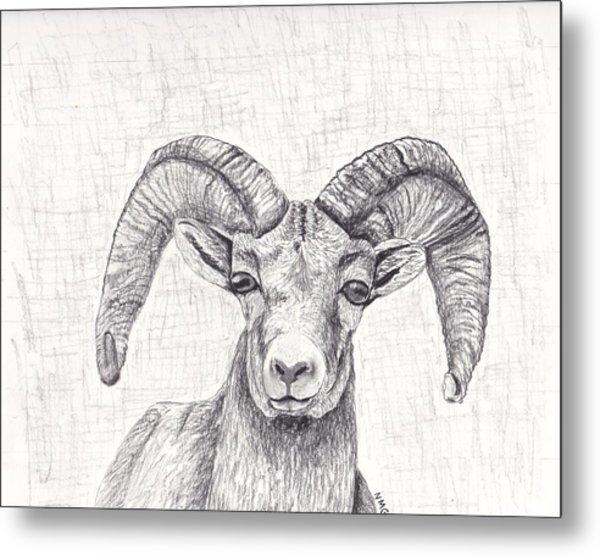 Bighorn Sheep Metal Print by Nicole Grattan