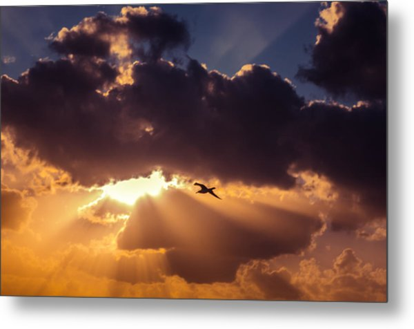 Bird In Sunrise Rays Metal Print