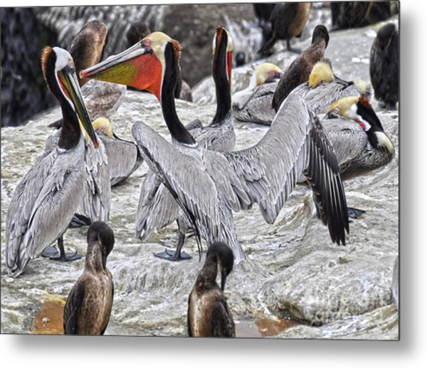 Bird Party  Metal Print by Judy Grant