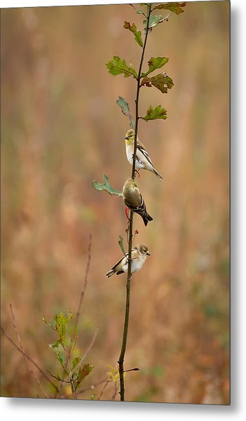 Bird Stack Metal Print