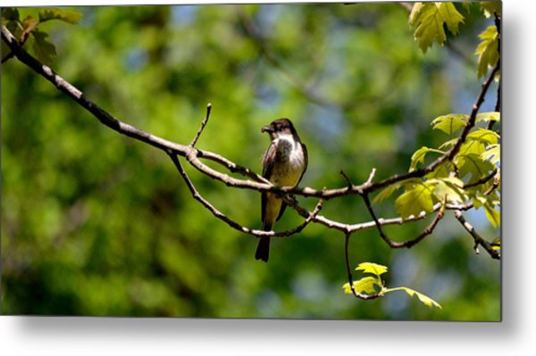 Bird With Worm Metal Print
