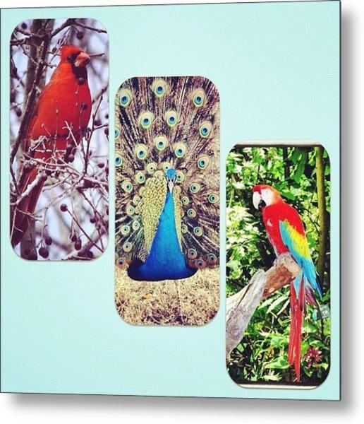 Birds Around Houston Metal Print