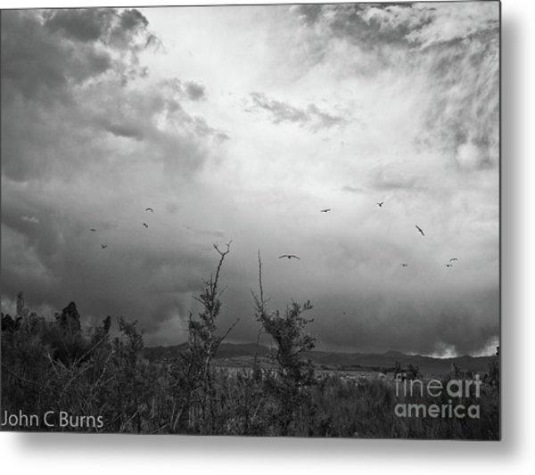 Birds At Mono Lake Metal Print
