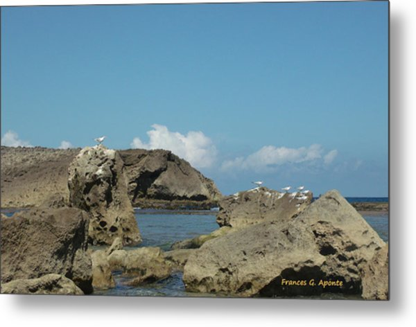 Birds Over The Rock Metal Print by Frances G Aponte
