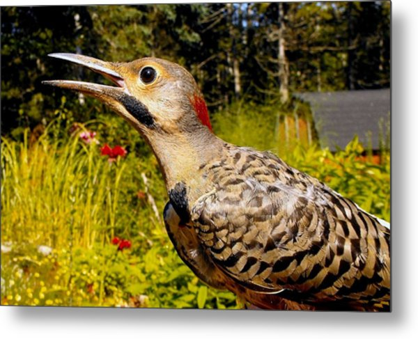 Birds Young Flicker Metal Print
