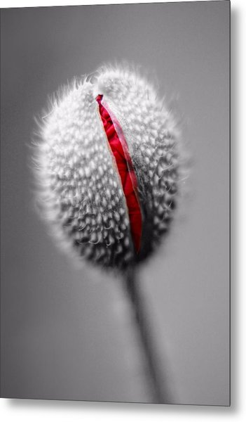Birth Of A Poppy Metal Print