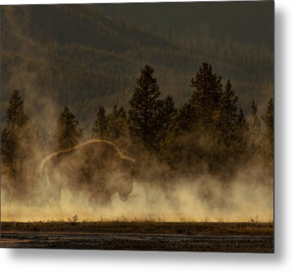 Bison In The Mist Metal Print