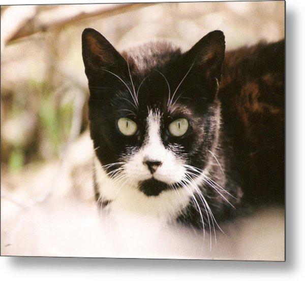 Black And White Feral Cat Metal Print