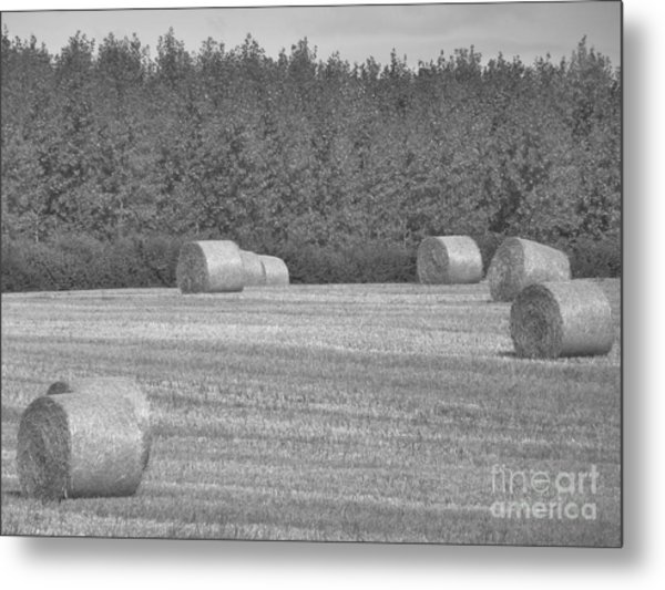Black And White Hay Bales Metal Print by Andrew May