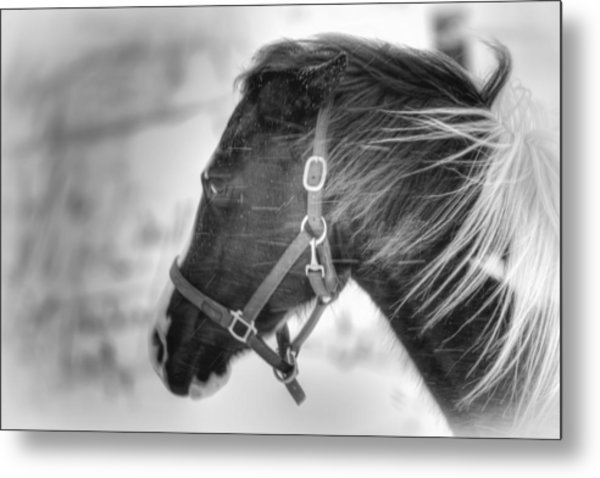 Black And White Horse Portrait Metal Print by Gary Smith