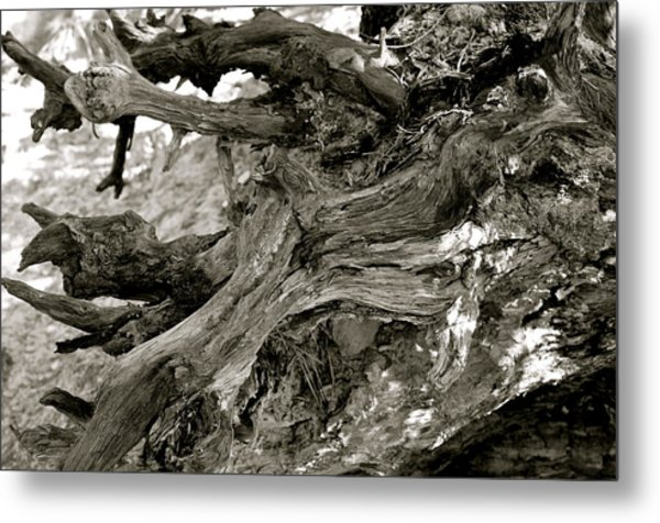 Black And White Kentucky Tree Stump Metal Print