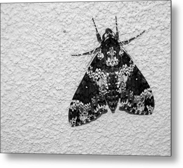 Black And White Moth Metal Print
