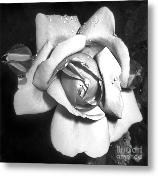 Black And White Rose Metal Print by Tina Ann Byers