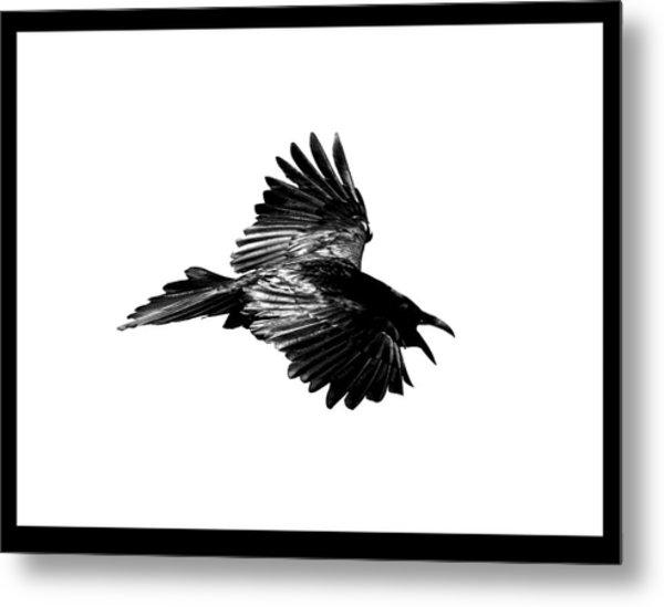 Black Bird Number 1 Metal Print