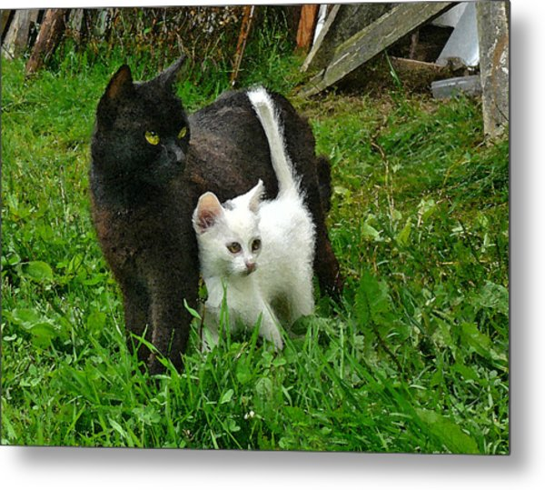 Black Cat Defends His White Kitten Metal Print