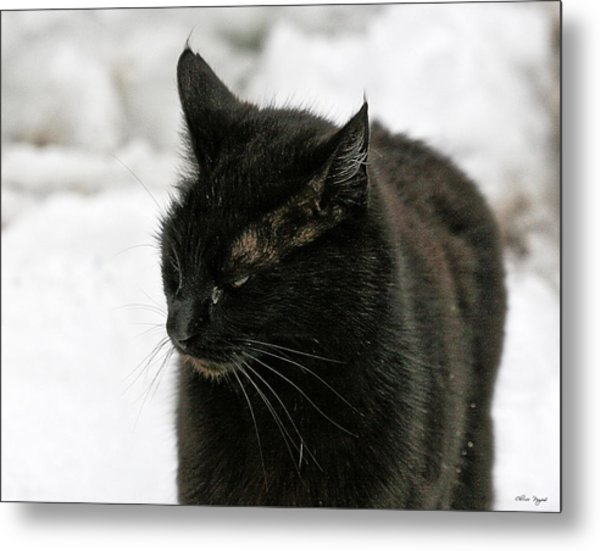 Black Cat White Snow Metal Print